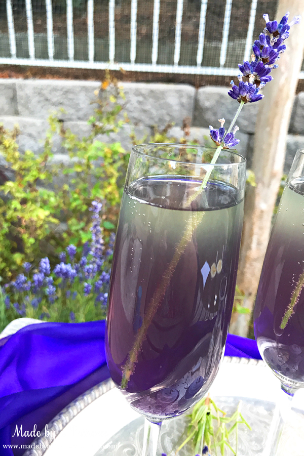 Lavender Elderflower Champagne Cocktail with a sprig of organic lavender